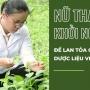Nữ thạc sĩ khởi nghiệp để lan toả giá trị dược liệu Việt
